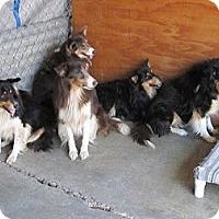 Adopt A Pet :: Anza Six - La Habra, CA