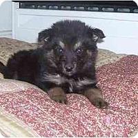 Adopt A Pet :: Bruno - Chandler, IN
