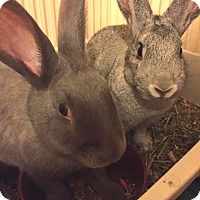 Adopt A Pet :: Charm and Kaci - Williston, FL