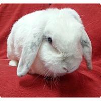 Adopt A Pet :: Izzy - Williston, FL