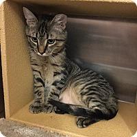 Adopt A Pet :: Gino - Colmar, PA