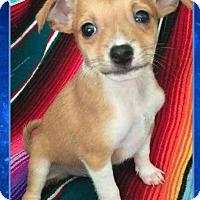 Adopt A Pet :: Peace - Scottsdale, AZ