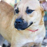 Adopt A Pet :: Crumbs - Columbus, GA