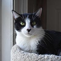 Adopt A Pet :: Oreo - Pine Bush, NY