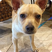Adopt A Pet :: Beemer - Santa Ana, CA
