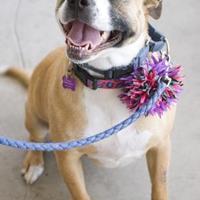 Adopt A Pet :: Marigold - Fresno, CA