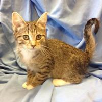 Adopt A Pet :: Maisy - Larned, KS