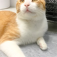 Adopt A Pet :: Lewis - Webster, MA