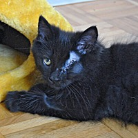 Adopt A Pet :: Levinsky - Mississauga, Ontario, ON