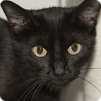 Adopt A Pet :: Patty Cake - Lombard, IL