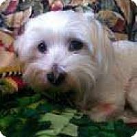 Adopt A Pet :: peter - Goleta, CA
