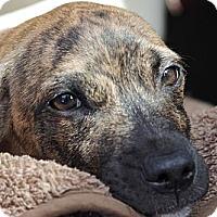 Adopt A Pet :: Ethan - Reisterstown, MD