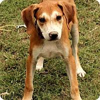 Adopt A Pet :: Buckley - Staunton, VA
