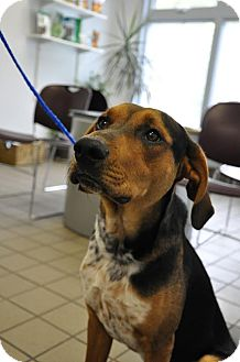 Hound (Unknown Type) Mix Dog for adoption in Hagerstown, Maryland - Buddy