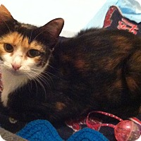 Adopt A Pet :: Colette - St. Louis, MO