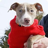 Adopt A Pet :: Elsie - Framingham, MA