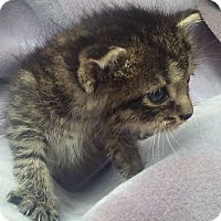 Adopt A Pet :: Lively, Loving Namie - Columbus, OH