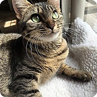 Adopt A Pet :: Toffee - Siren, WI