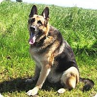 Adopt A Pet :: Mack - Pleasant Grove, CA