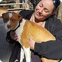 Adopt A Pet :: Kyle - Blue Bell, PA