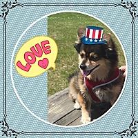 Adopt A Pet :: Buttons - St. john, IN