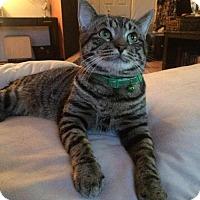 Adopt A Pet :: Trudeau - Potomac, MD