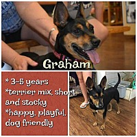 Adopt A Pet :: Graham Cracker - Colmar, PA