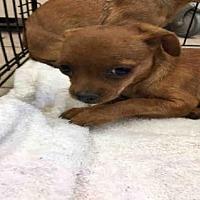 Adopt A Pet :: A094727 - Hanford, CA