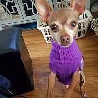 Adopt A Pet :: Lexie Lou - Indianapolis, IN