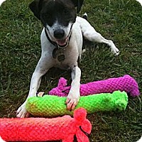 Adopt A Pet :: Riley in Tulsa - Oklahoma City, OK