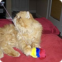 Adopt A Pet :: Daydream Believer - Beverly Hills, CA