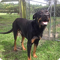 Adopt A Pet :: Tar - Alachua, GA