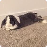 Adopt A Pet :: Milton - Paramount, CA