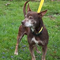 Adopt A Pet :: Walter - New Martinsville, WV