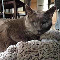 Adopt A Pet :: G I Joe - Edmonton, AB