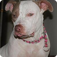 Adopt A Pet :: Miss Mo - Inglewood, CA
