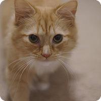 Adopt A Pet :: Tristan - Stafford, VA
