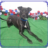 Adopt A Pet :: MAJOR - Marietta, GA