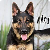 Adopt A Pet :: Maximus - Joliet, IL