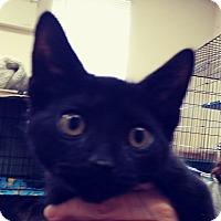 Adopt A Pet :: Bippity - Trevose, PA