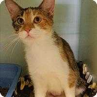 Adopt A Pet :: Sweetie - Bloomingdale, NJ