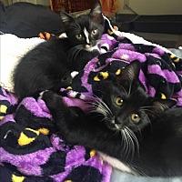 Adopt A Pet :: Lammy - Hollister, CA