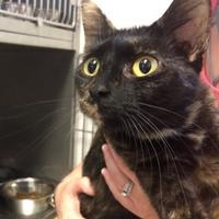 Adopt A Pet :: Terra - Calais, ME