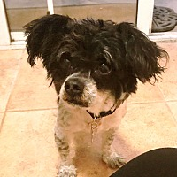 Adopt A Pet :: Jinx - Encino, CA
