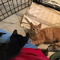 Adopt A Pet :: Pepe - Hollywood, MD