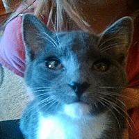 Adopt A Pet :: WV - Titan - Blairstown, NJ