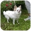 Photo 1 - Chihuahua Dog for adoption in Raymond, New Hampshire - Sprocket