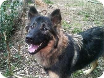 German Shepherd Dog/Collie Mix Dog for adoption in ROCKMART, Georgia - DAISY