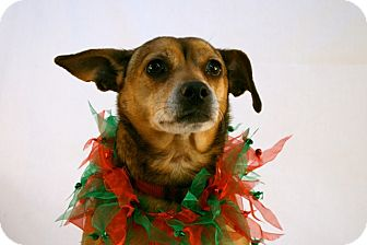 Terrier (Unknown Type, Small) Mix Dog for adoption in Marion, Wisconsin - Corky