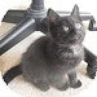 Adopt A Pet :: Remo - Vancouver, BC